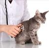 Ветеринарные клиники в Сурском